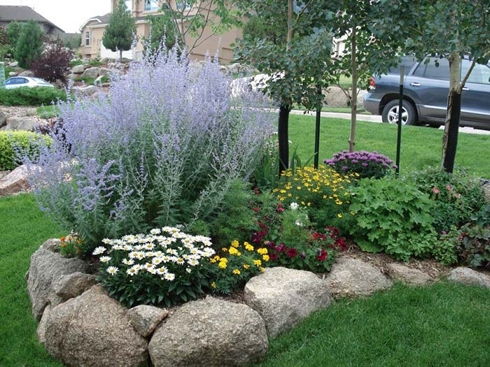 Residential-Russian-sage