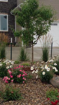 lawn-care-testimonial
